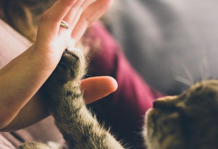 ペットと暮らす1