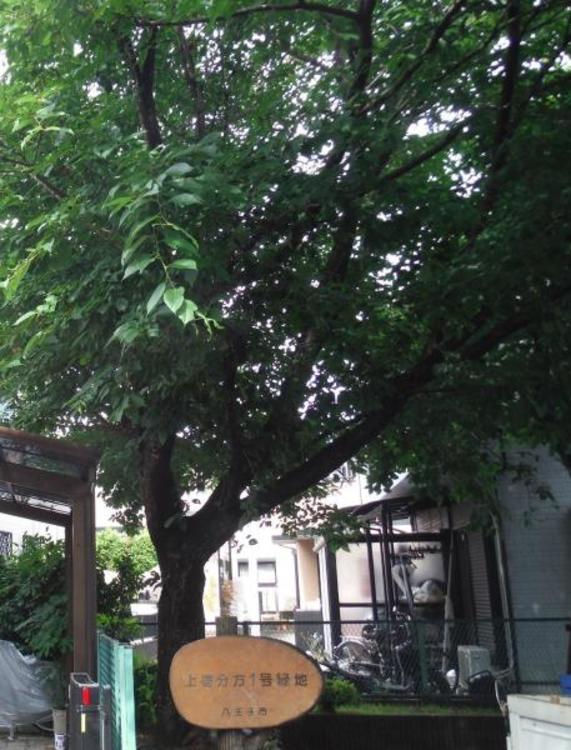 上壱分方1号緑地 390m
