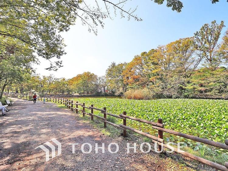 菊名池公園 距離850m