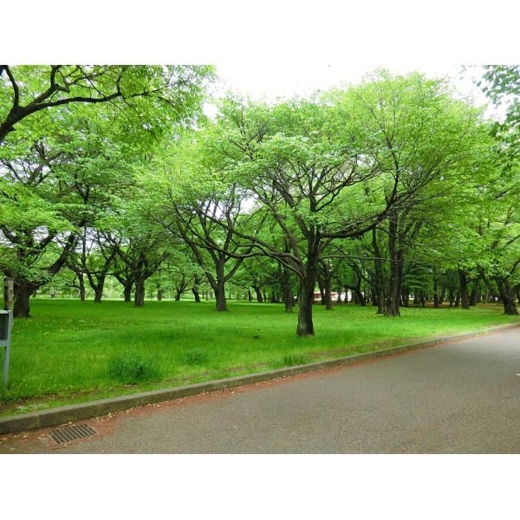 小金井公園(約740m)