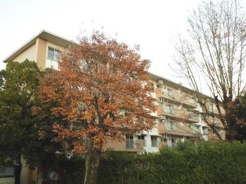 新栄町住宅1街区3号棟の物件画像