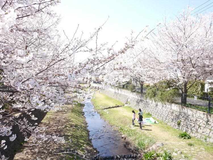 野川まで795m 春には桜を・・。