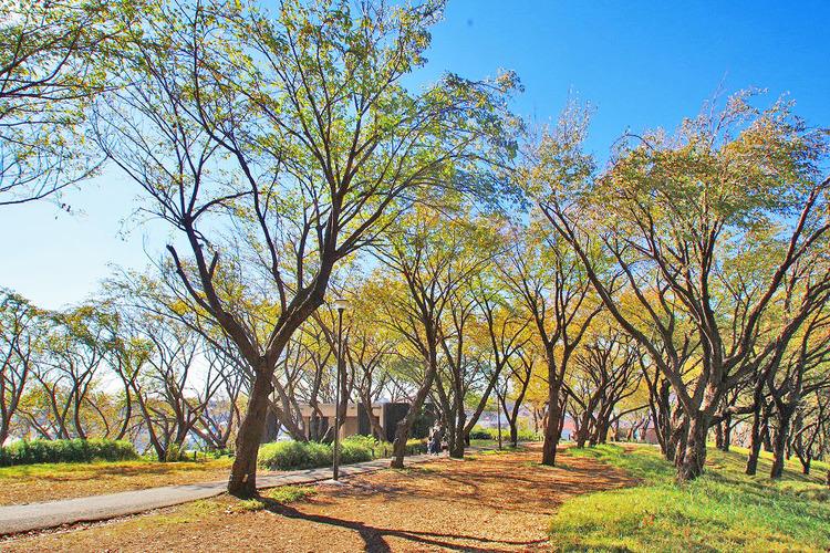菊名桜山公園  距離約160m
