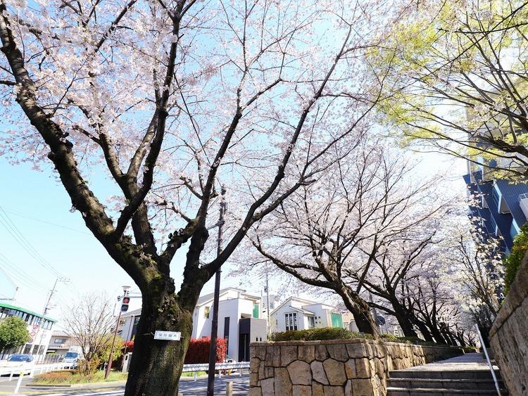 桜咲くこの季節は、毎日桜を堪能できます。素晴らしい風情を毎日ご堪能ください。