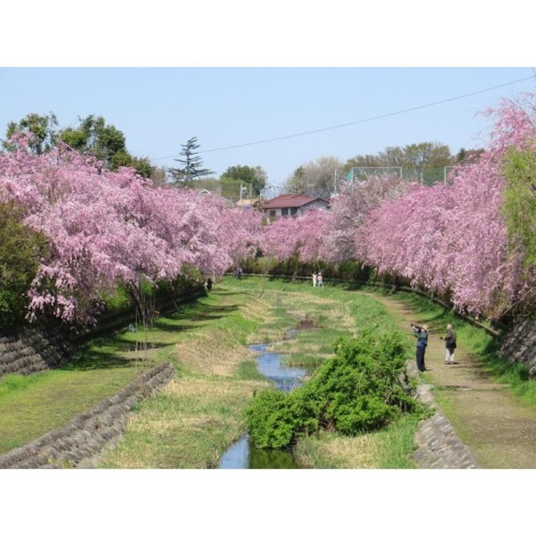 都立武蔵野公園(約1000m)