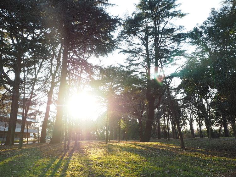 江古田の森公園 距離561m