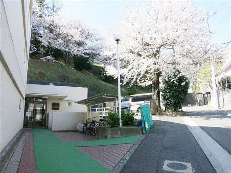 春には玄関部分は桜咲く綺麗な風景が見られます。日本の桜はやはり綺麗ですね〜