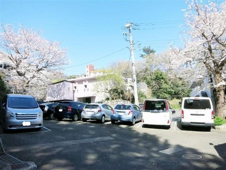駐車場にも桜が咲き乱れます。春はお花見もできますよ!