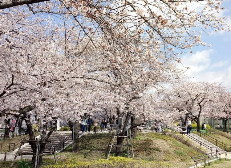 隅田川沿いの公園。春になると桜がきれいです