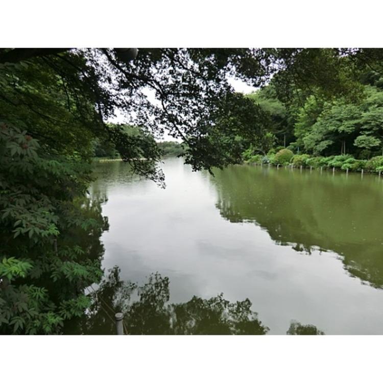 善福寺公園(約430m)