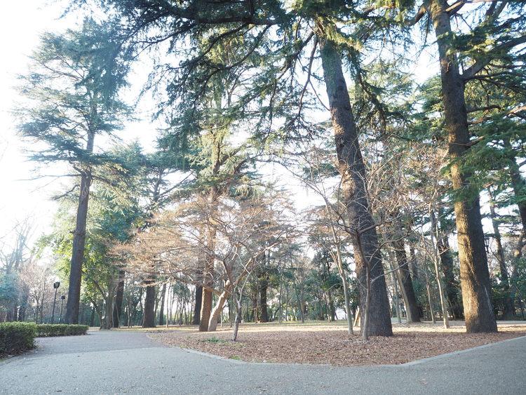 江古田の森公園まで1100m