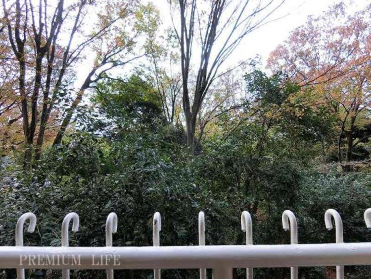 四季折々の表情を見せてくれる六義園の緑。日常の喧騒を忘れさせ、心に安らぎをもたらしてくれます。